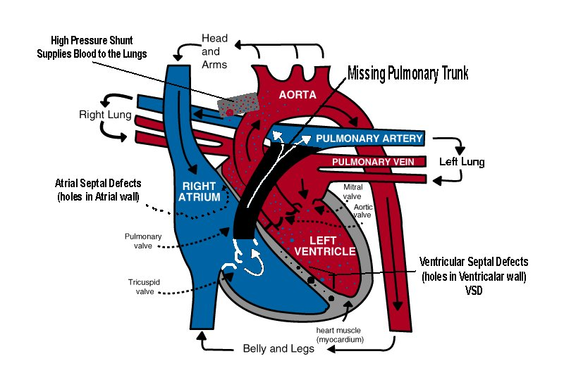 how the heart works - 800×550